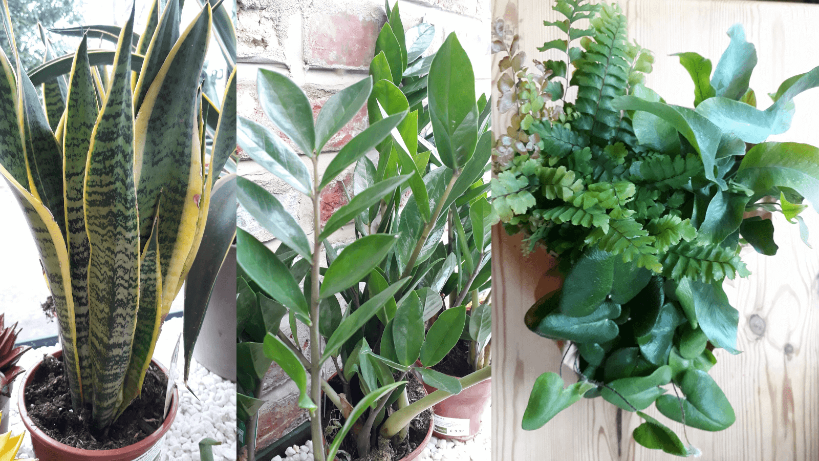 House plants for shade